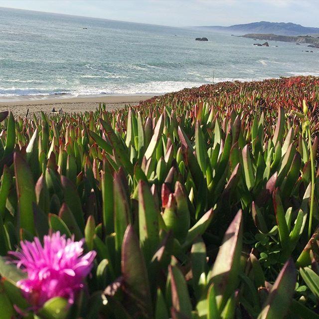 Caliparks : Sonoma Coast State Park