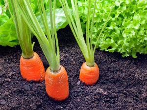 Managing your vegetable garden!