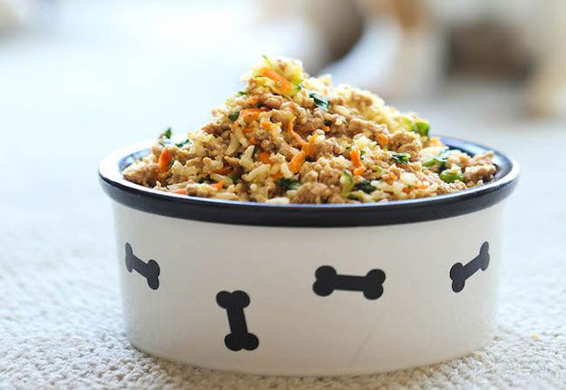 Why spend so much money when you can easily make yourself one of these homemade dog food recipes?!