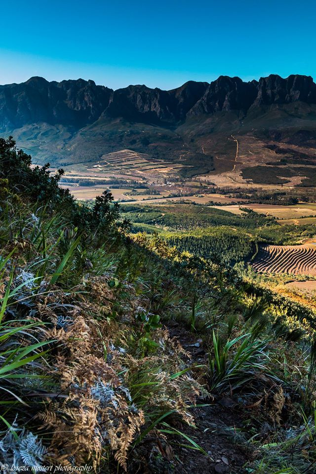 Helderberg Nature Reserve. Somerset West.