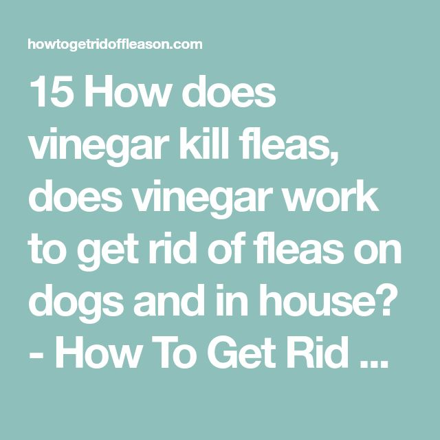 15 How does vinegar kill fleas, does vinegar work to get rid of fleas on dogs and in house? - How To Get Rid of Flea on Dogs on Cats and in the House