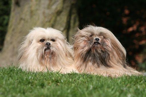 Kosmetyki dla psów długowłosych