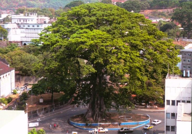 The Cotton Tree is a historic symbol to the city of Freetown and the people of Sierra Leone. The tree gained significance in 1792 when former African-American slaves who gained their freedom through the U.S. War of Independence, settled on the site of Freetown. Today the tree stands near the Supreme Court building and Sierra Leonians still come to pray and make peace offerings under the tree.