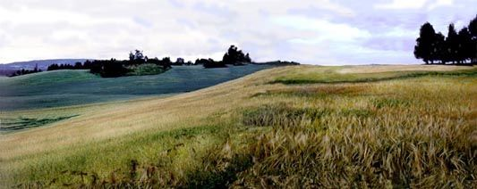 Loten wheat field