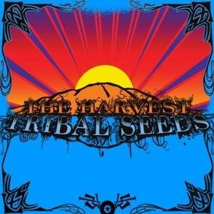 The Harvest - Tribal Seeds