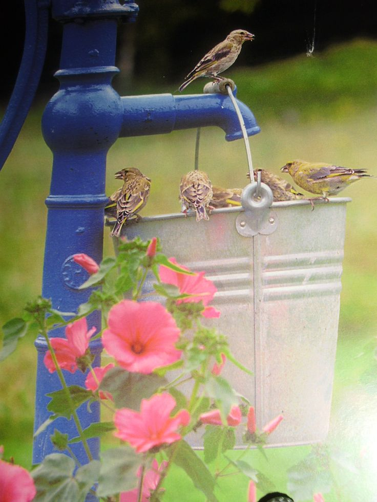 Pink flowers,old tin bucket hanging off vintage blue painted water pump with pretty finches.