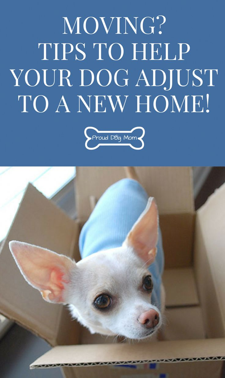 Moving? Tips To Help Your Dog Adjust To A New Home! – Moving