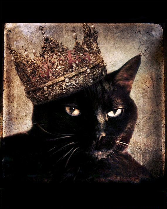 A Deo rex, a rege lex ... Black Cat photo Animal photography animal art by TheLonelyPixel