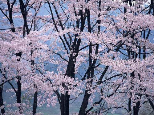japanese nature - Google-søk