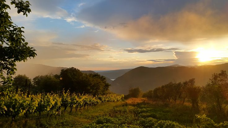 View over a vineyard towards Lago Corbara in the Tiber valley between Todi and Orvieto. Photo by Caroline van Agteren