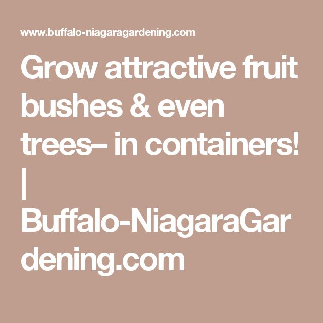 Grow attractive fruit bushes & even trees– in containers! | Buffalo-NiagaraGardening.com