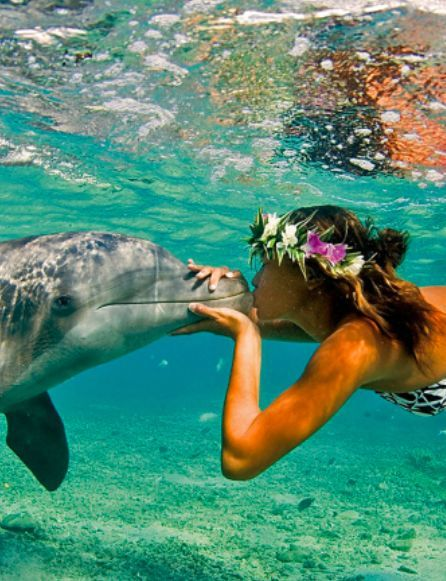 The resorts for animal lovers. – #The # for #Animal friends #Holiday place – ceonlinemarketing