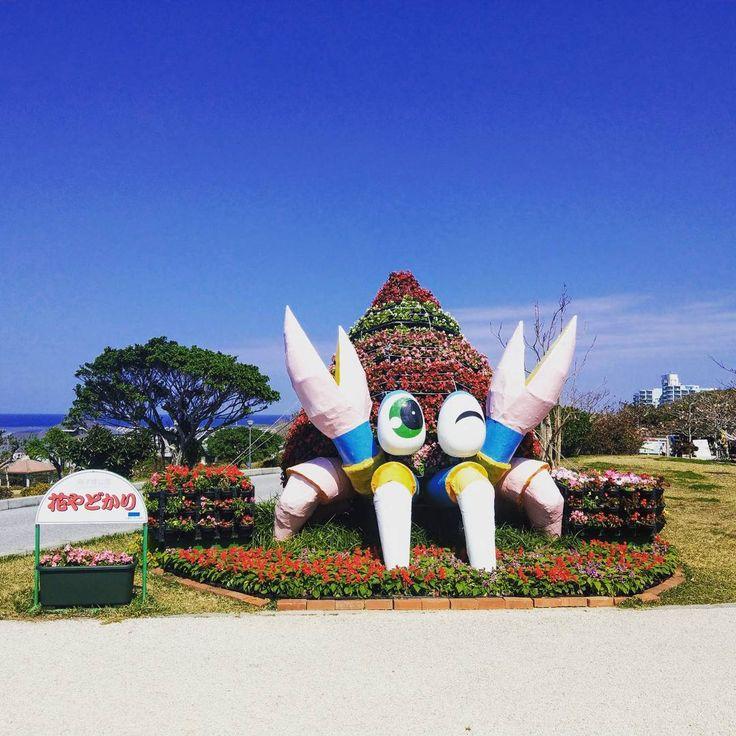 美ら海で見つけたヤドカリ先輩 敬意を表してご挨拶  #trip #vacation #sea #aquarium #hermitcrab #okinawa  #旅行 #一人旅 #海 #水族館 #美ら海水族館 #沖縄 #ヤドカリ #やどかりコーヒー