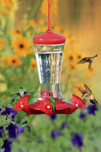 Hummingbird Sugar Water 101 | Birds & Blooms