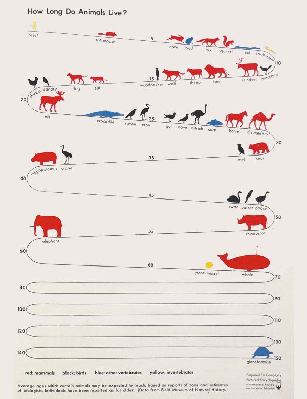 [Infographic] How Long Do Animals Live?