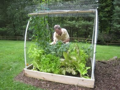 Best 25 Vegetable Garden Fences Ideas On Pinterest