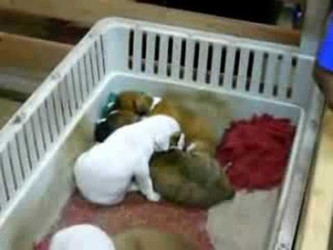 Putting the puppies to bed.....