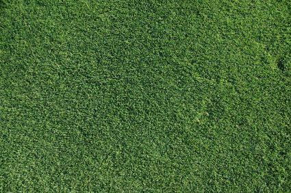 fall summary bermudagrass performance test soccerplex grounds
