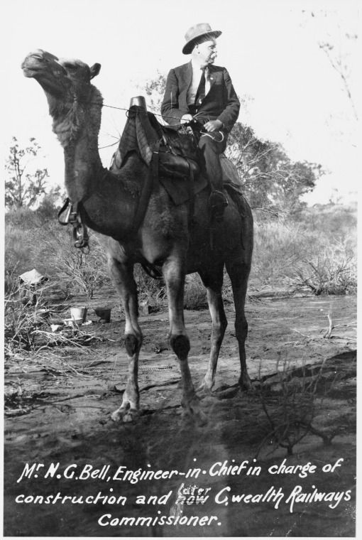 209896PD: Norris Garett Bell, Commissioner of Railways, on camel-back, ca. 1917. https://encore.slwa.wa.gov.au/iii/encore/record/C__Rb3761340