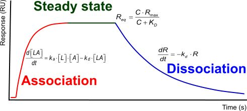 thesis of physics