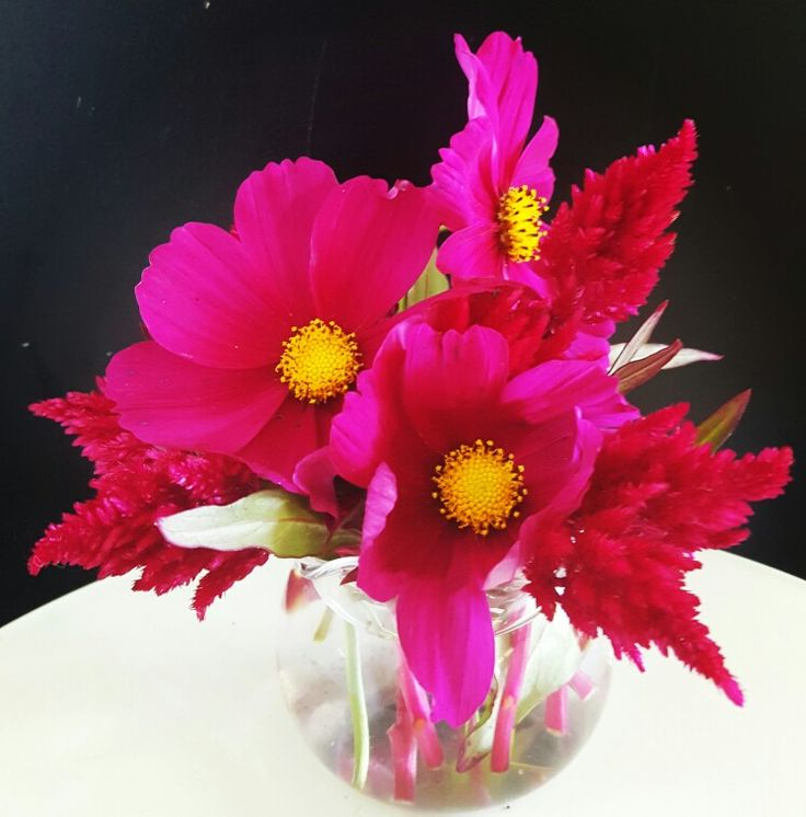 Weekly posy - cosmos and celosia