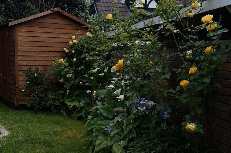 Summer flowers in the garden