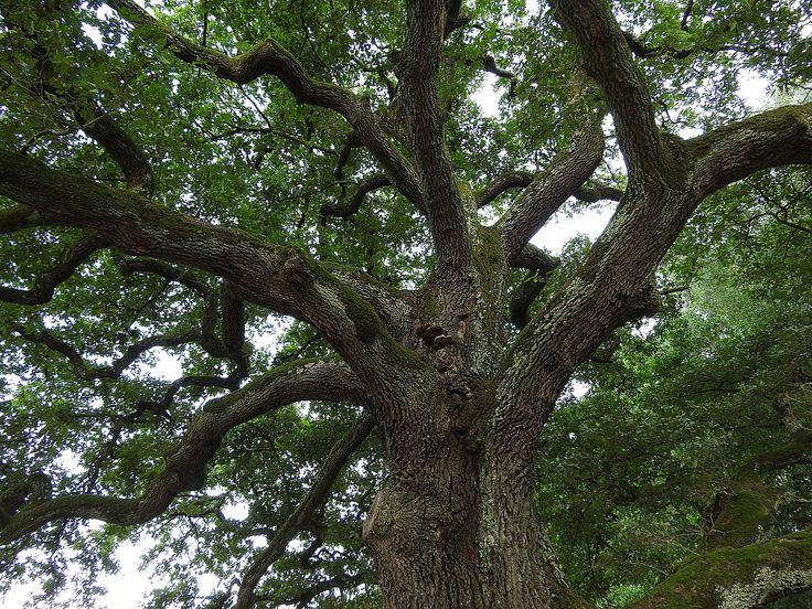 Me As A Tree