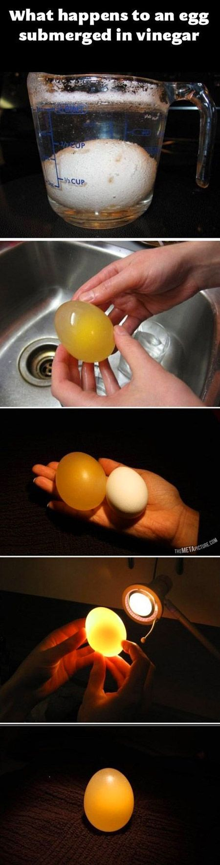 This is what happens when you put an egg in vinegar for a while.
