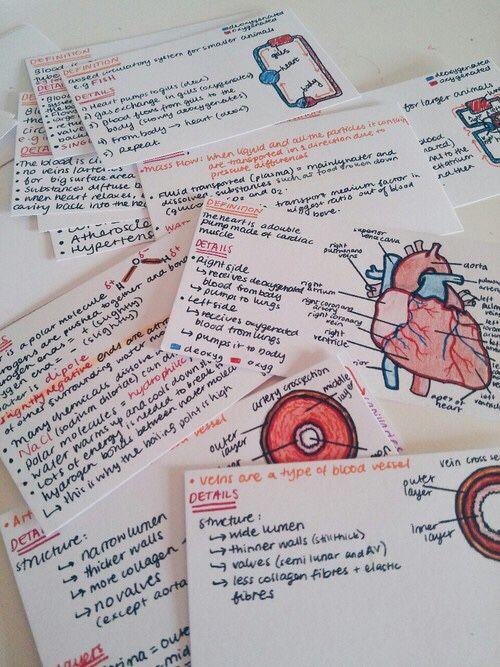 Organizar apuntes deberes notas tarjetas biología corazón estudiar