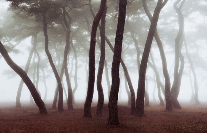 Переплетённые стволы деревьев. Автор фотографии: Натаниэль Мерц (Nathaniel Merz).