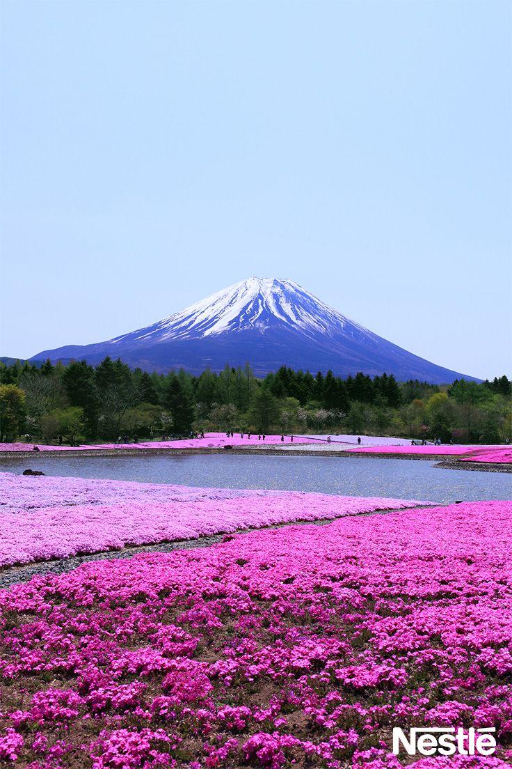 祝☆富士山世界遺産登録♪ fujisan♪ Mt.Fuji♪ 富士は日本一の山〜♪ですね。