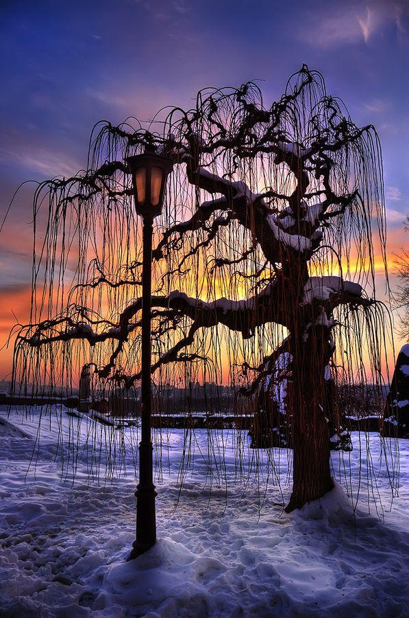 Tree Of Patience, Belgrade, Serbia
