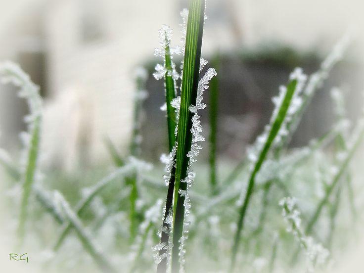 Bevroren gras.