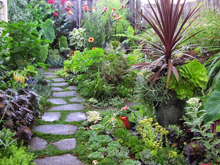 Garden With Tropical Plants And Pathway Natural Pest Control For Your Garden