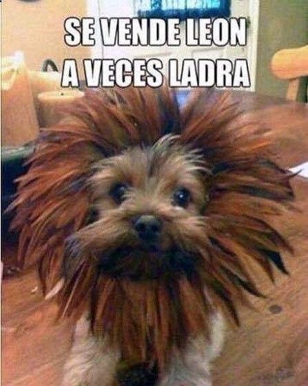 Imagenes de Humor #memes #chistes #chistesmalos #imagenesgraciosas #humor www.megamemeces.c... ➣➢➣ http://www.diverint.com/memes-matarse-risa-origen-dora-exploradora