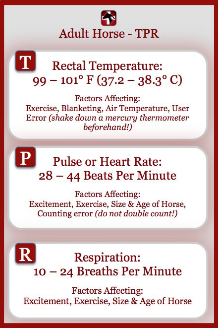 Equine Vital Signs