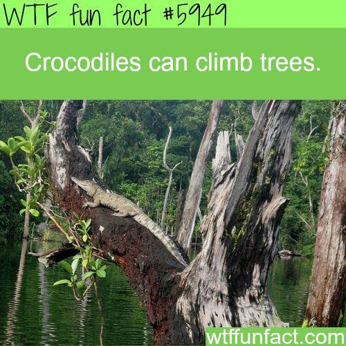 Crocodiles can climb trees - WTF fun facts