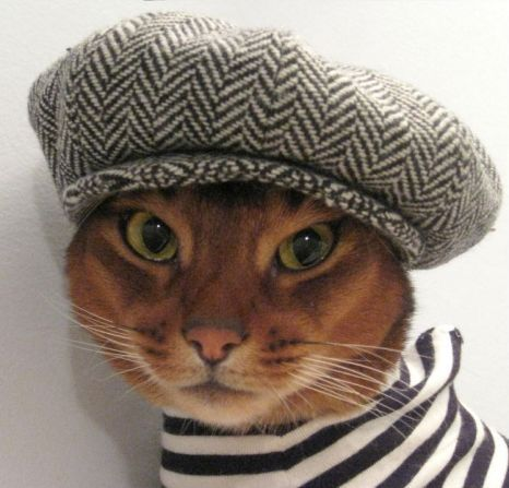 Designer creates cool cat clothing range for fashion forward felines  http://www.etsy.com/shop/CatAtelier