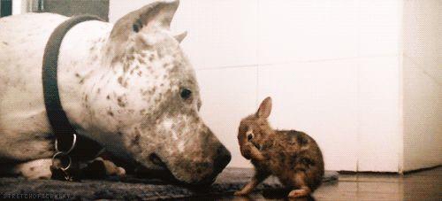 Dog and rabbit kisses.