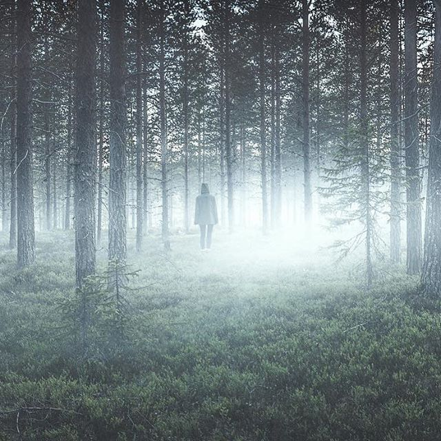 Sleep-Walkers. Foggy forrest, is it a dream or a fantasy? Magical photograph from Calle Artmark