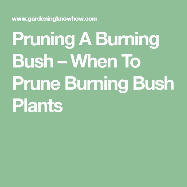 Pruning A Burning Bush – When To Prune Burning Bush Plants