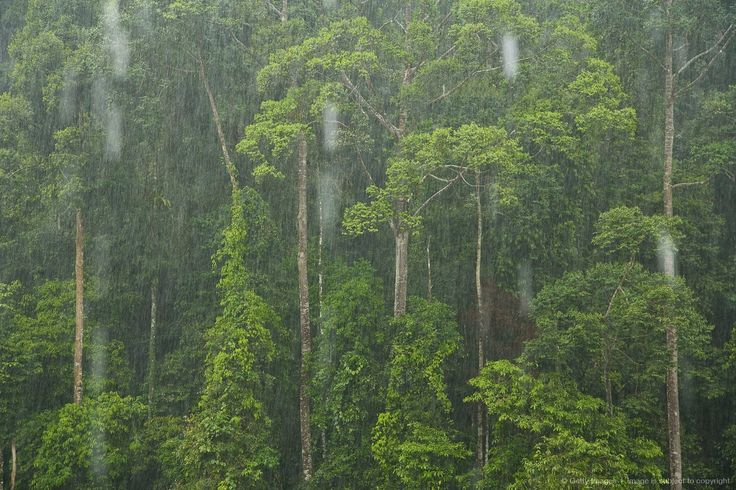 Rain, Danum Valley Conservation Area. Sabah, Borneo, Malaysia