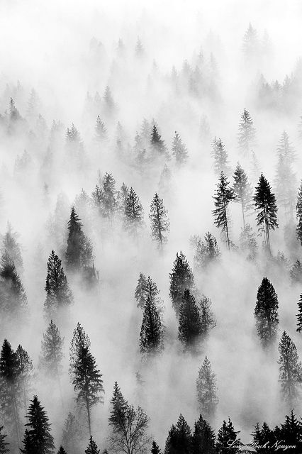Forest trees hidden in a haunting fog. Duvall, Washington, USA // Long Bach Nguyen