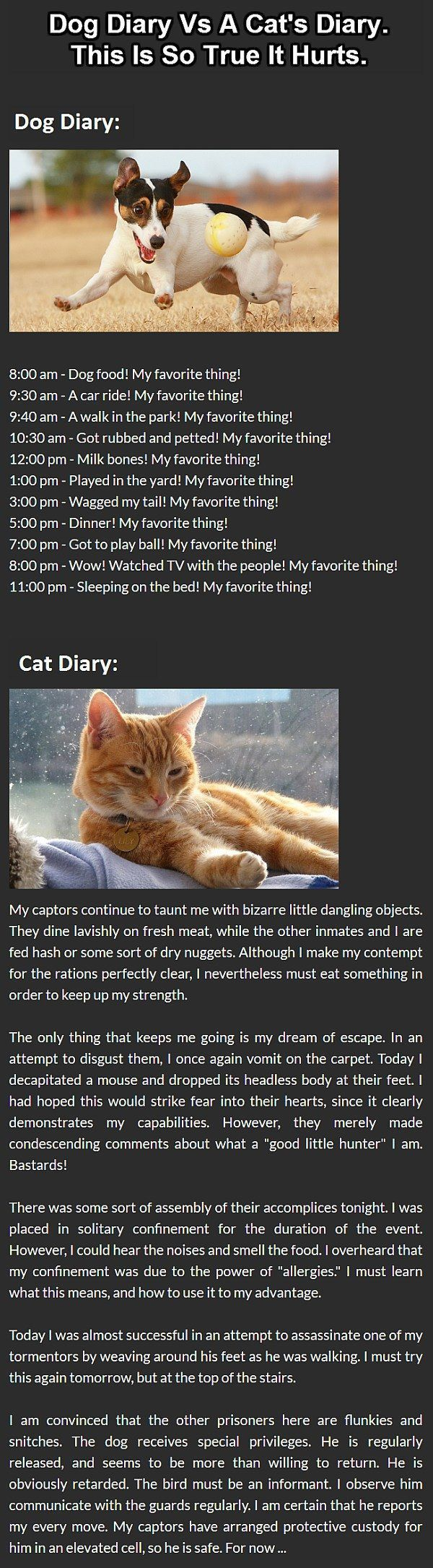 When you come to think about it, dog vs. cat diaries, got us thinking #dogsvscats