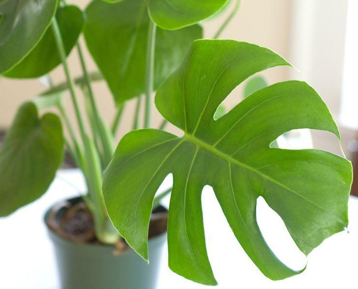 6 plantas de interior que purificarán el aire de tu casa (segunda parte)