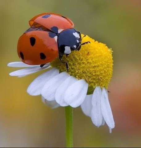 Lady bug, lady bug fly away!
