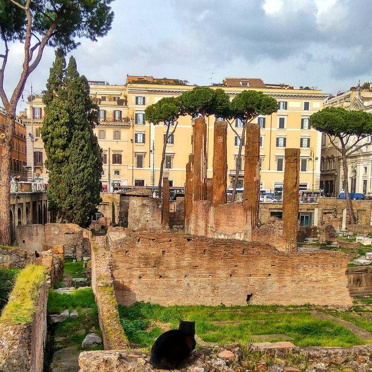 И в догонку: в Риме больше любят собак 🐕, это вам не второй Рим (я о Стамбуле). В большей свой части собаки самые обычные! Без пафоса и родословных, иными словами: дворняги. Для каждого места, выбор животных обычно свой.   Так вот, в Риме нет кошечек🐈. И есть одно место руин, где они есть! Показываю вам редкости Рима!   #котик #котиковмногонебывает #римскиеканикулы #солнечно #хорошеенастроение #рим #жизньхороша #кошка #рим #развалины #руины #cats_life #cat #nature_perfection #naturelovers…