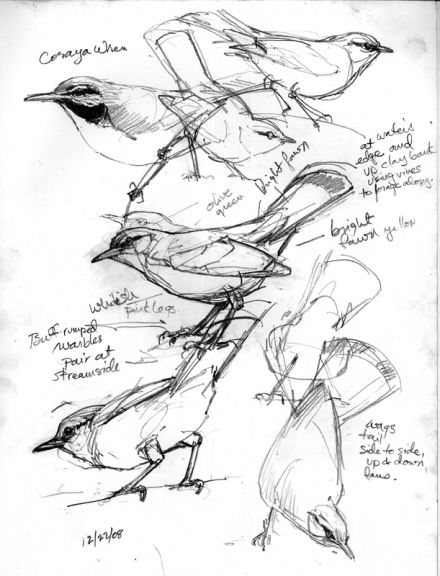 Tropical nature sketches by Debby Kaspari. I think she really captures the movement of birds here. Love black and white line drawings.