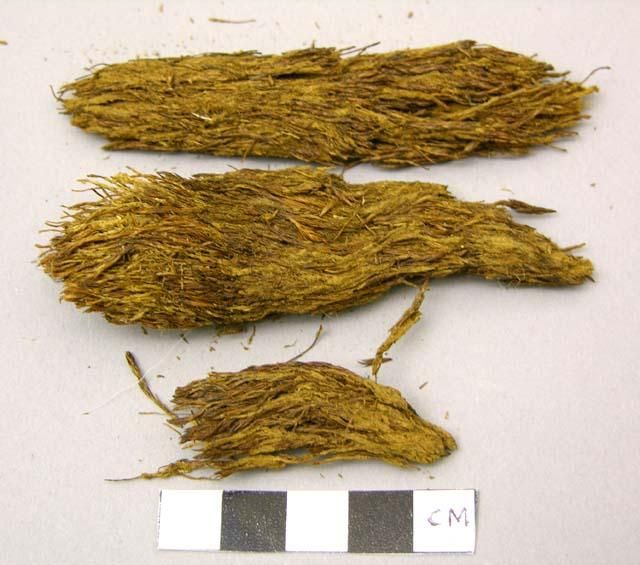 Peabody Number: 93-14-10/49711 Display Title: Moss tinder Descriptions:  Catalog Transcription: Moss tinder Inventory Description: Pieces of moss or bark Classification:  Moss Department:  Ethnographic Culture/Period:  Greenland Eskimo Geography/Provenience:  North America/Greenland Geo-Locale: Arctic highlands Materials: Moss