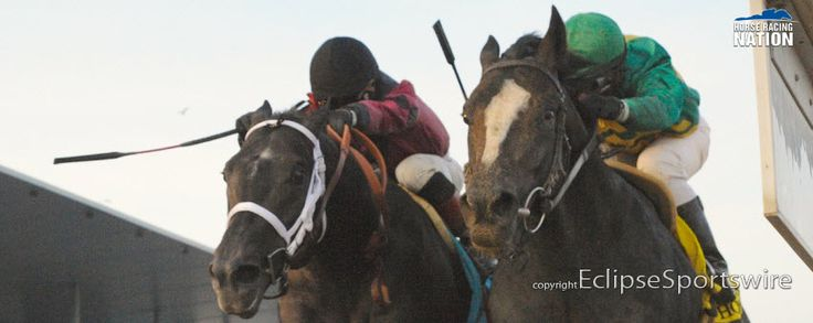 Kentucky Derby 2014 contender Honor Code defeats Cairo Prince by a nose in the Remsen!